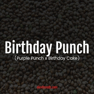 Birthday Punch