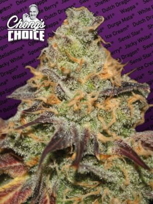 Blue Kush Berry Chong's Choice