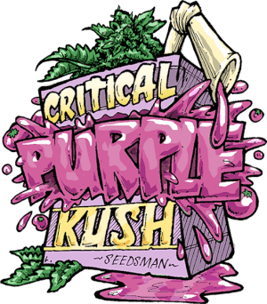 Critical Purple Kush by Seedsman