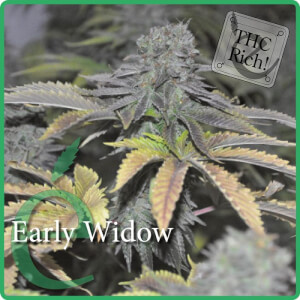 Early Widow