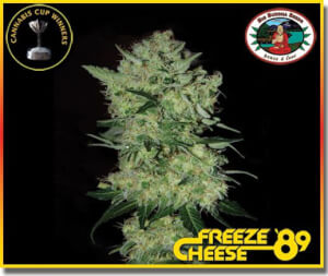 Freeze Cheese '89