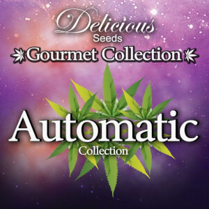 Gourmet Collection Automatic Strains #1