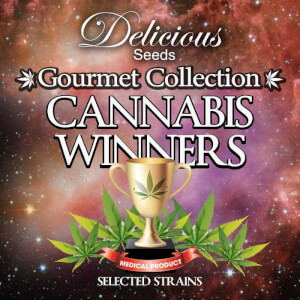 Gourmet Collection Cannabis Winner Strains #1