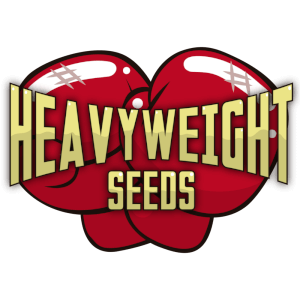 Heavyweight Seeds Feminitzada