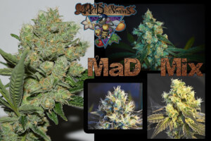 MaD Mix Reg