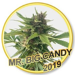 Mr. Big Candy - Regular
