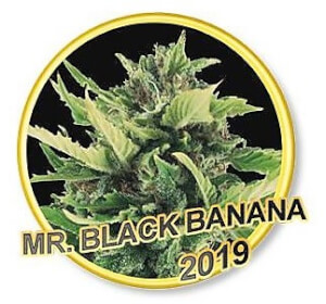 Mr Black Banana