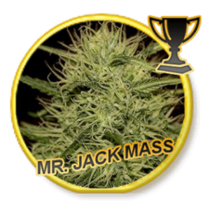 Mr Jack Mass - Regular