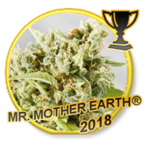 Mr Mother Earth - Regular