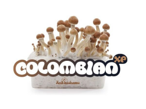 Pain de culture de champignons Colombian XP - Freshmushrooms