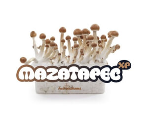 Mazatapec XP mushroom growing kit - Freshmushrooms