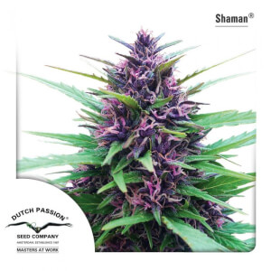 Shaman - regular seeds