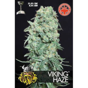 Viking Haze
