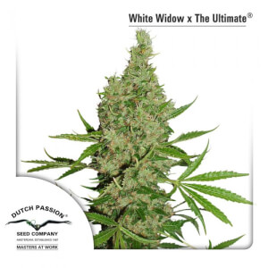 White Widow x The Ultimate