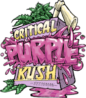 Critical Purple Kush