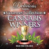 Gourmet Collection Cannabis Winner Strains #2