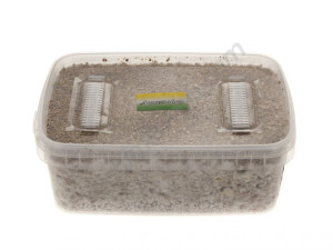 Amazonian mushroom growing kit - Setnatur