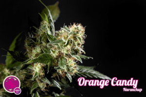 Orange Candy / Naranchup