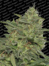 Original Cheese 5 semillas
