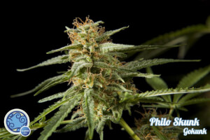 Philo Skunk / Gokunk