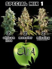Special Mix 1- Eva Seeds