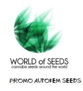 World of Seeds Auto Promo 1 semilla