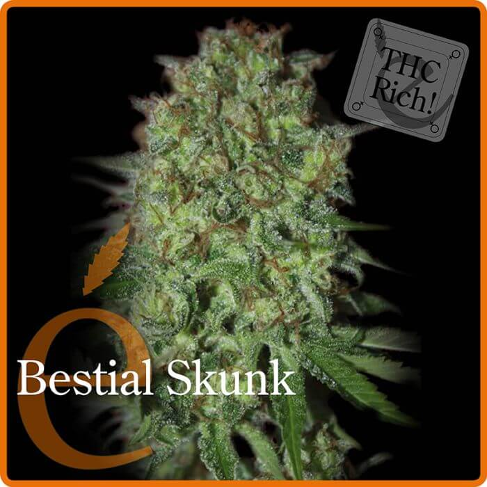 Bestial Skunk - Elite Seeds