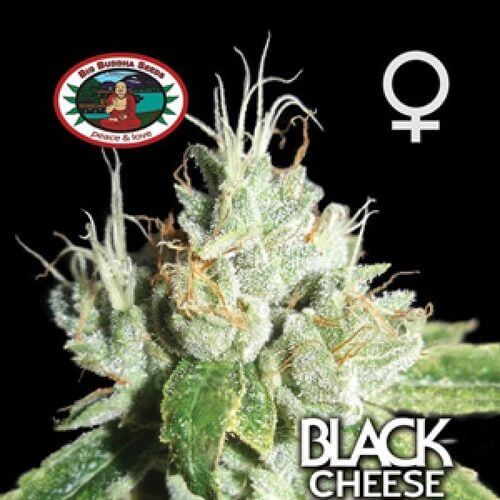 Black Cheese