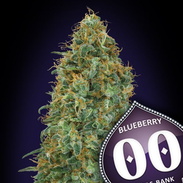 Blueberry 00 Seeds