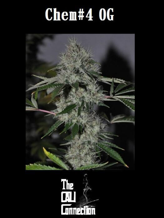 Chem 4 OG - Feminized Seeds
