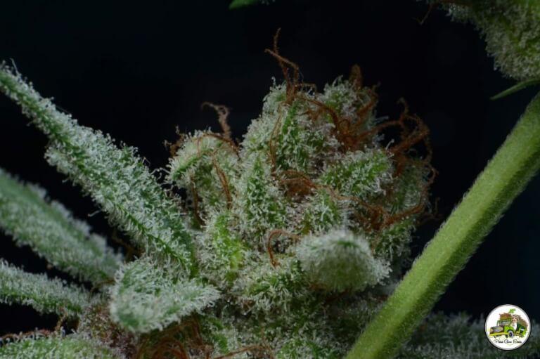 rencontre fumeur cannabis Villeurbanne