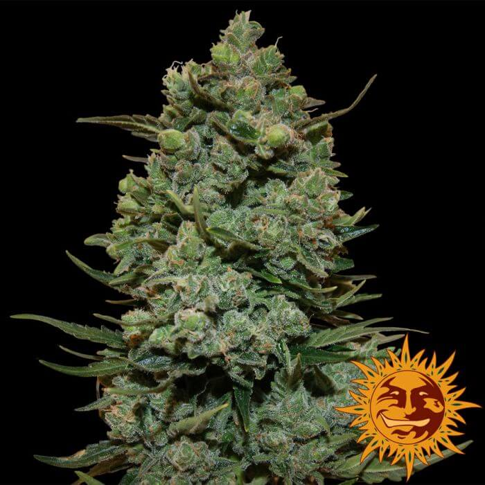 Weed Grow Room Temperature
