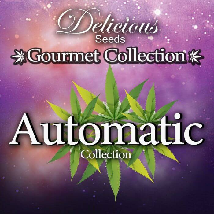 Gourmet Collection Automatic Strains #2