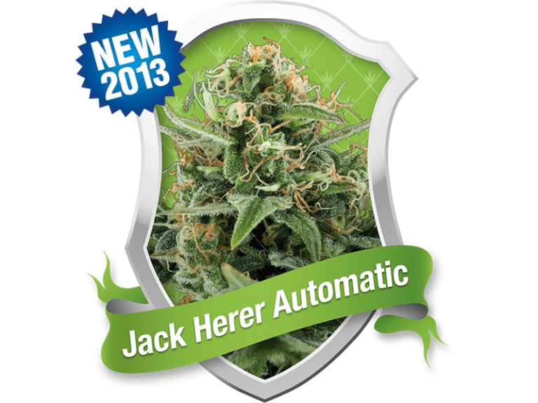 Royal Jack / Jack Herer Auto