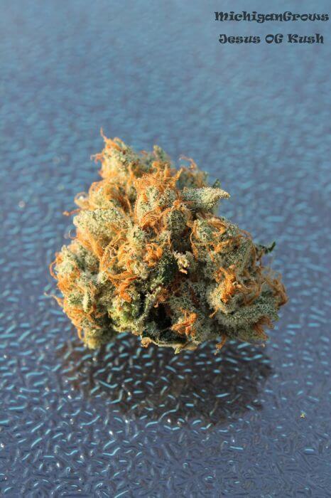 Vente de graines de cannabis r guli res de jesus og de tga for Og kush exterieur