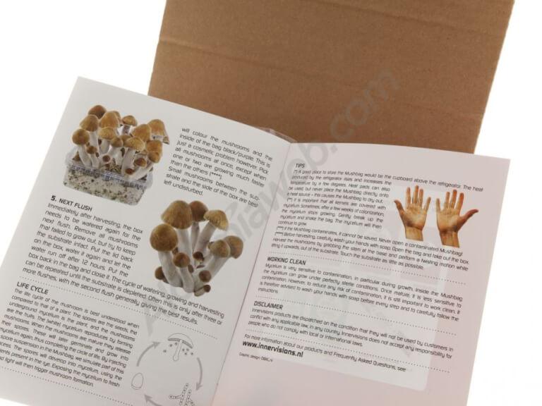 Psilocybe B+ mushrooms growing kit - Innervisions