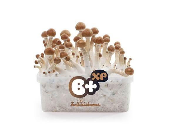 Magic mushrooms breads