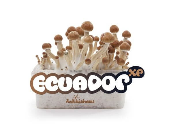 Ecuador XP mushroom growing kit - Freshmushrooms
