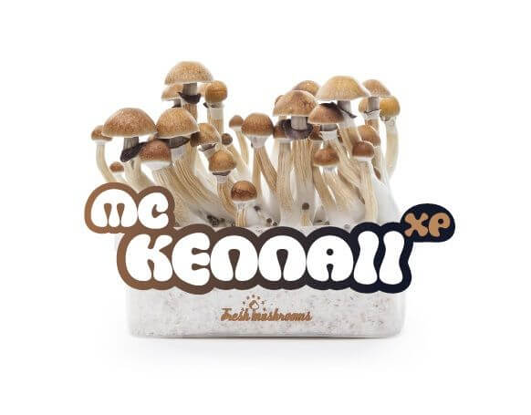 Pain de culture de champignons McKennaii XP - Freshmushrooms