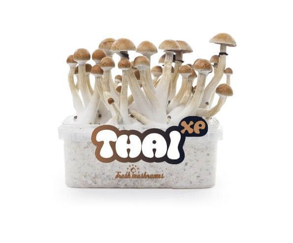 Pan de cultivo de setas Thai XP - Freshmushrooms