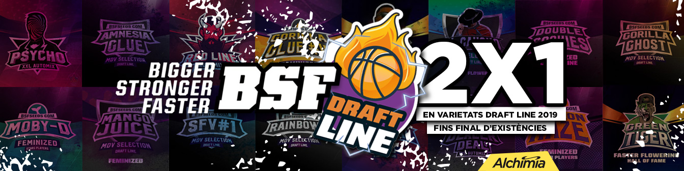 BSF Draft Line 19 2x1