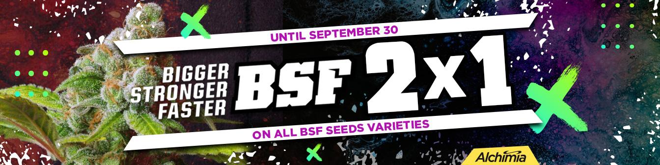 BSF 2x1 Set 2020