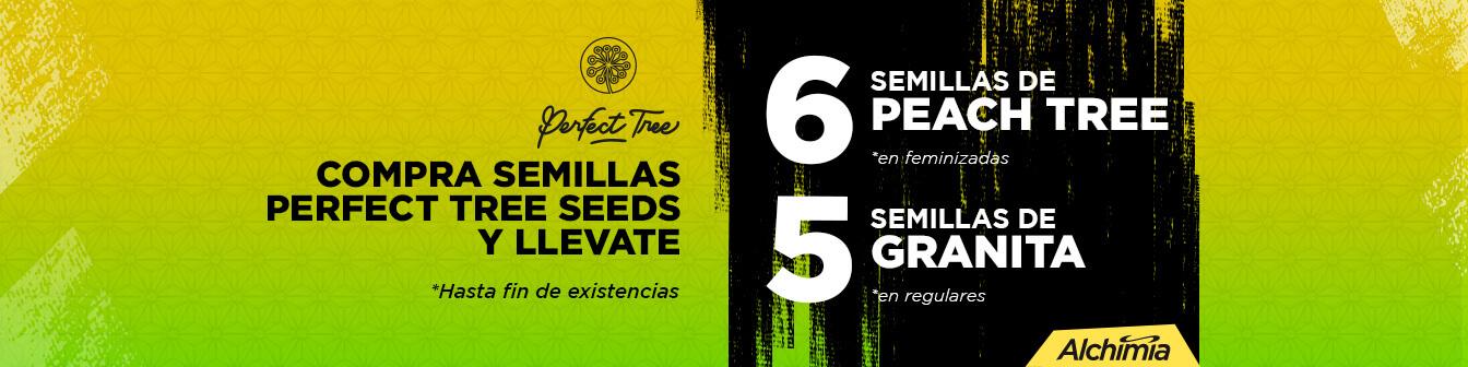 Perfect Tree 6+6 i 12+5