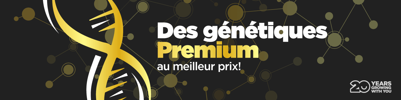 Geneticas Premium 21
