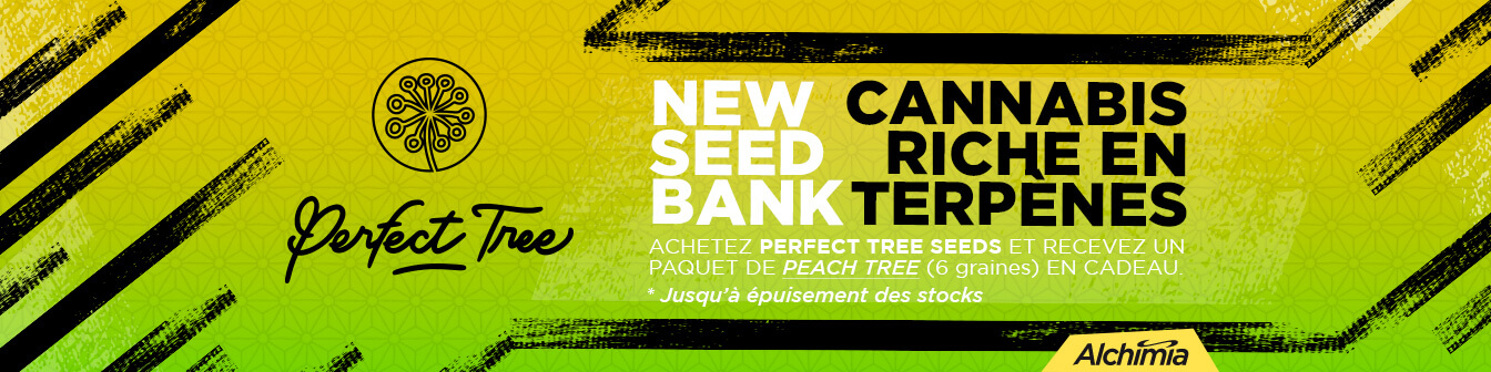 Perfect Tree Novetat + Peach Tree Free